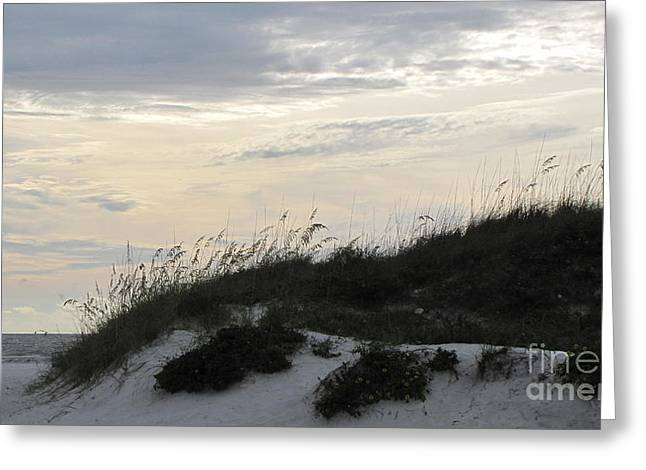 Dunes At Dusk Greeting Card by Gayle Melges