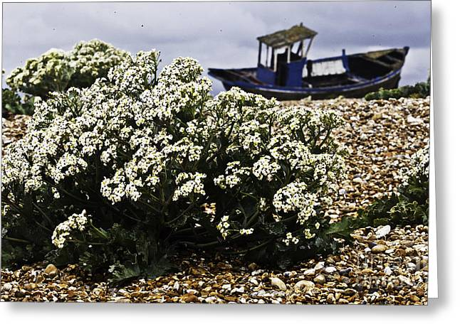 Dungeness Seascape Greeting Card by Lesley Rigg