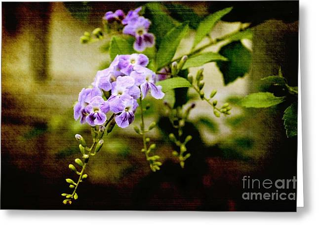 Greeting Card featuring the photograph Duranta Bush by Rosemary Aubut