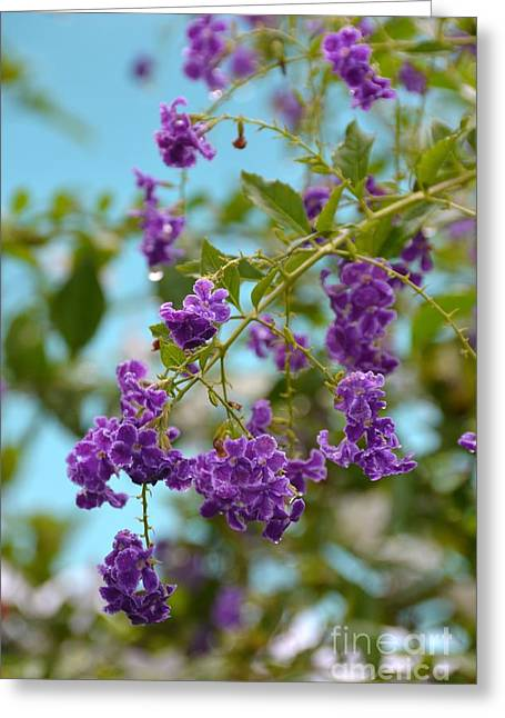 Greeting Card featuring the photograph Duranta- Fresh Morning by Darla Wood
