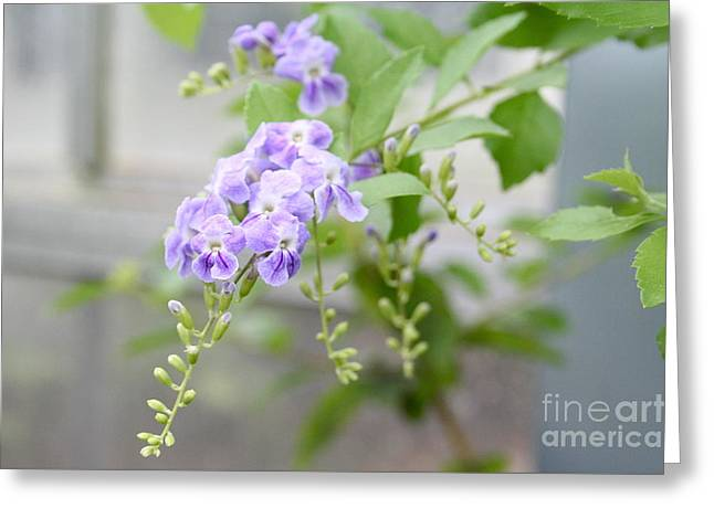 Duranta Greeting Card