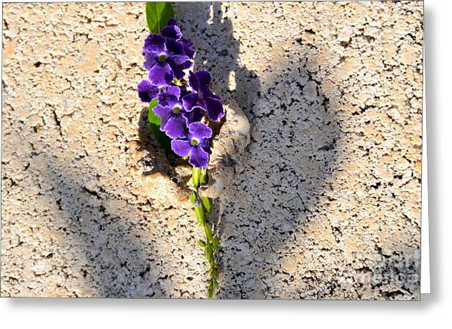 Greeting Card featuring the photograph Duranta- Shadow Play 1 by Darla Wood