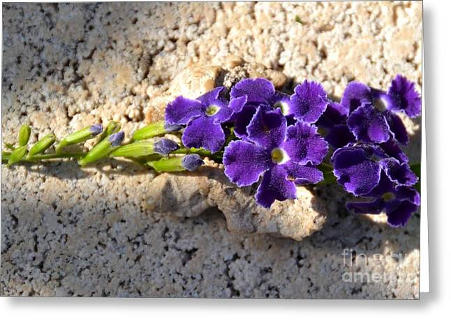 Greeting Card featuring the photograph Duranta- Shadow Play 2 by Darla Wood