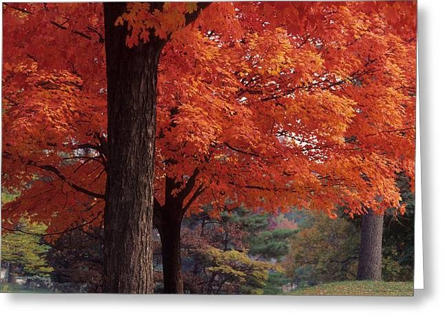Druid Park -- Baltimore-maryland Greeting Card by Harold E McCray