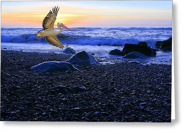 Dusk Flight Of The Pelican Greeting Card