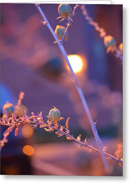 Dusk Flowers Greeting Card by Deprise Brescia