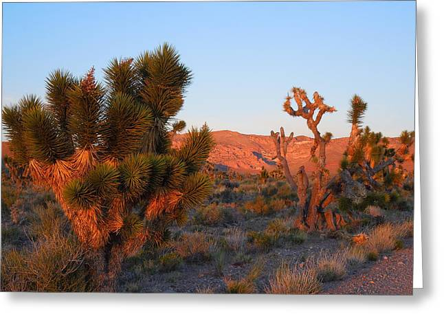 Dusk In The Desert Greeting Card
