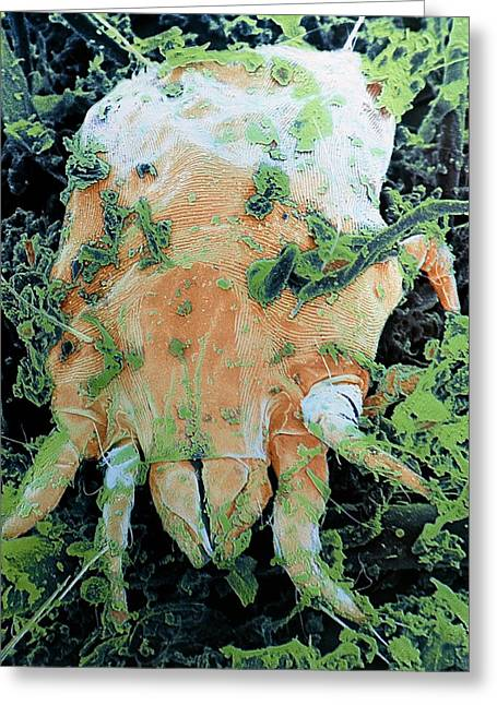 Dust Mite Greeting Card