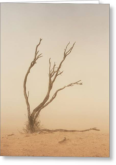Dust Storm In The Auob Riverbed Greeting Card