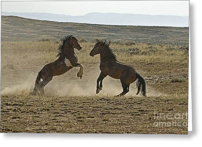 Dust Up At Mccullogh Peaks Greeting Card by Bob Dowling