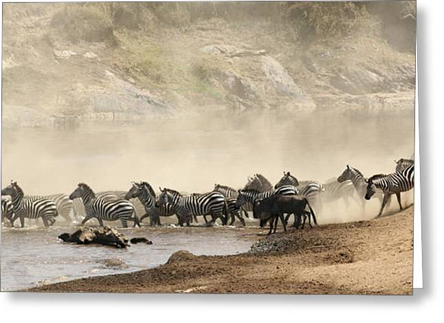 Greeting Card featuring the photograph Dusty Crossing by Liz Leyden