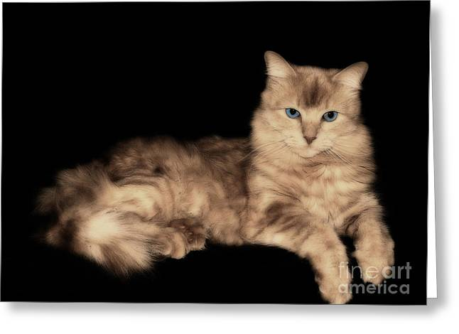 Greeting Card featuring the photograph Dusty by JRP Photography