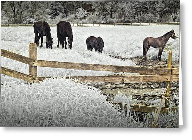 Dutch Friesian Horses Behind A Wooden Fence In A Pasture Greeting Card