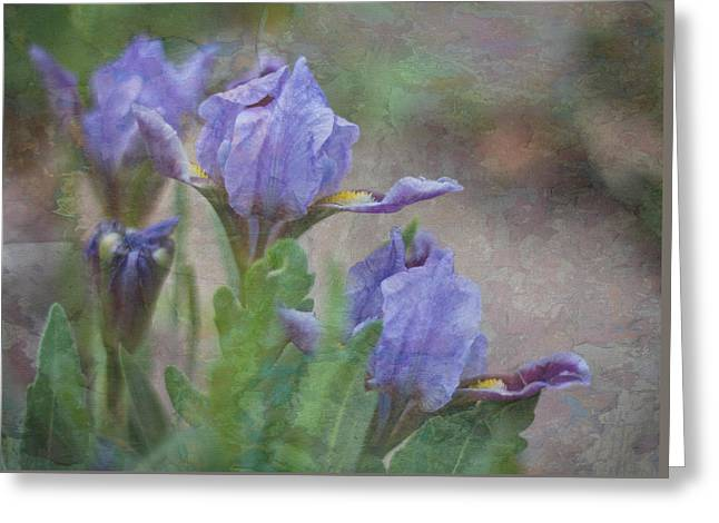 Greeting Card featuring the photograph Dwarf Iris With Texture by Patti Deters