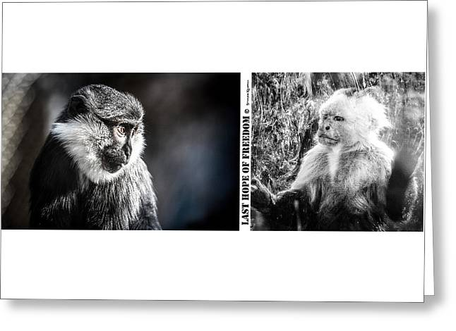 Greeting Card featuring the photograph diptych Last hope of Freedom  by Stwayne Keubrick