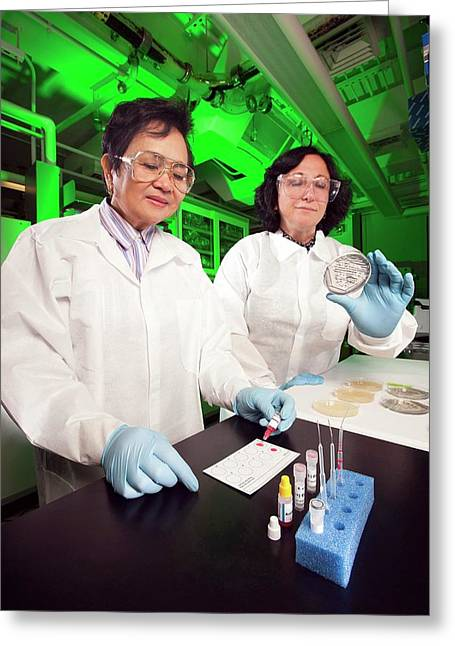 E. Coli Stec Bacterial Testing Greeting Card