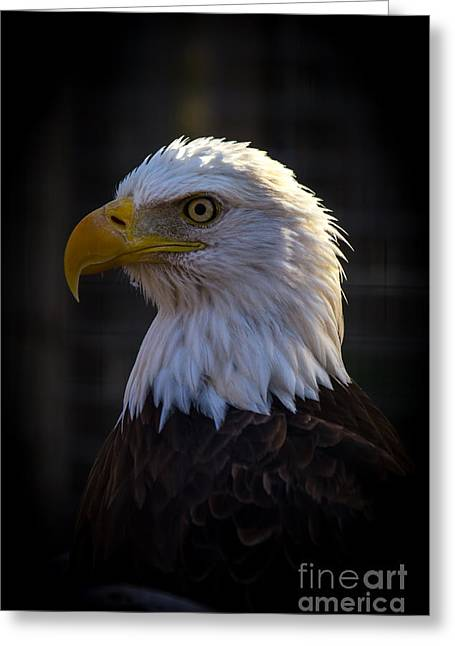 Eagle 1 Greeting Card by Jim McCain