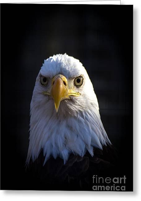 Eagle 2 Greeting Card by Jim McCain