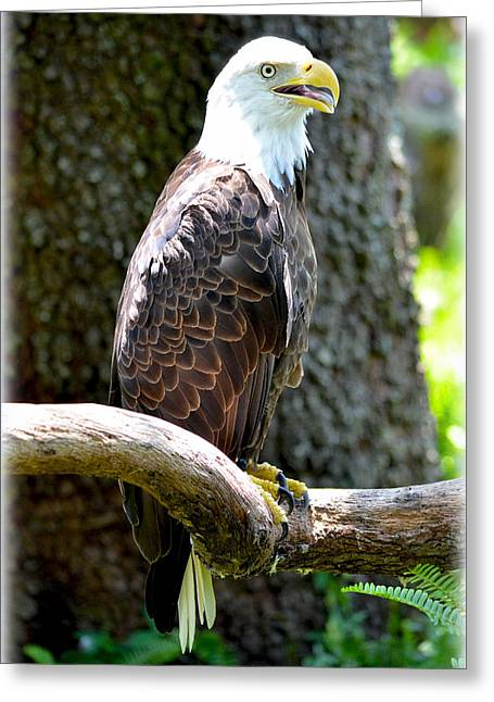 Greeting Card featuring the photograph Eagle by Amanda Vouglas