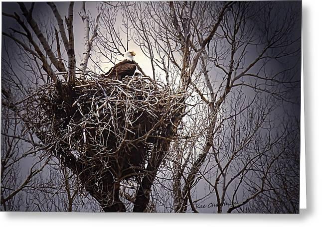 Eagle At Home Greeting Card
