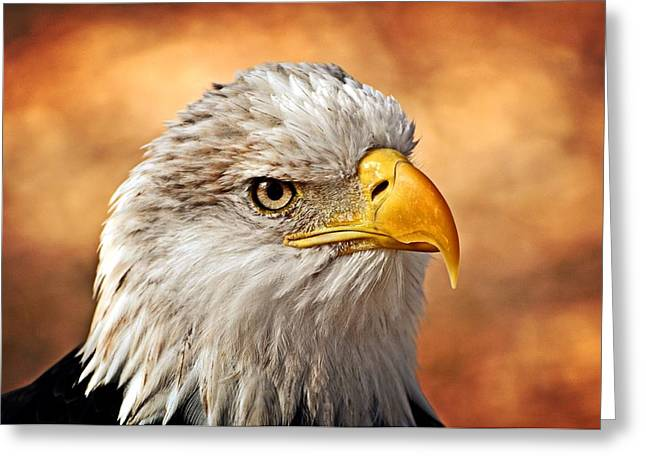 Eagle At Sunset Greeting Card by Marty Koch