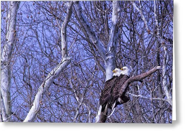 Eagle Couple Above Potomac River Greeting Card