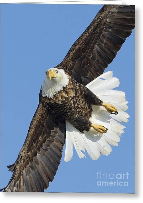 Eagle Embankment Greeting Card by John Blumenkamp