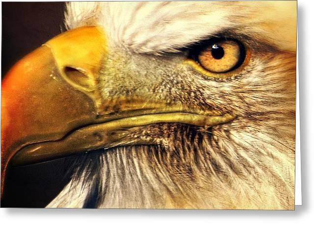 Eagle Eye 7 Greeting Card by Marty Koch
