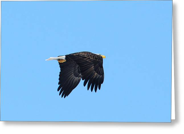 Greeting Card featuring the photograph Eagle Eye by David Armstrong