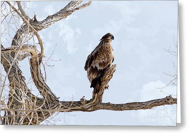Eagle Eye Greeting Card by Lori Tordsen