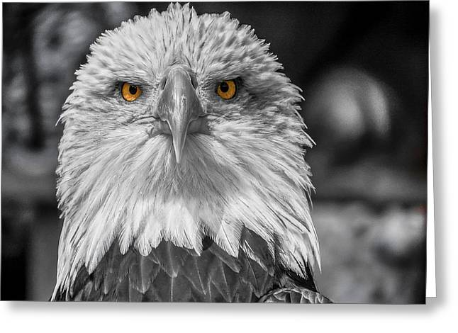 Eagle Eyed Greeting Card by Angela Aird