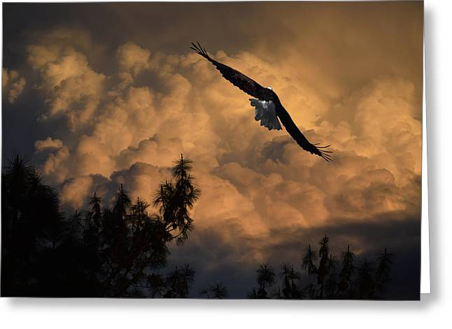 Eagle Flying Into The Storm Greeting Card by Frank Wilson