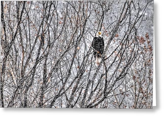 Eagle In Blizzard Greeting Card by Britt Runyon