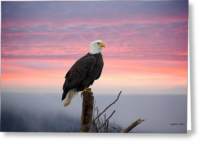 Greeting Card featuring the photograph Eagle In The Mist by Sylvia Hart