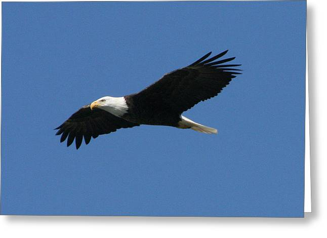 Eagle Greeting Card by Jeff Wright