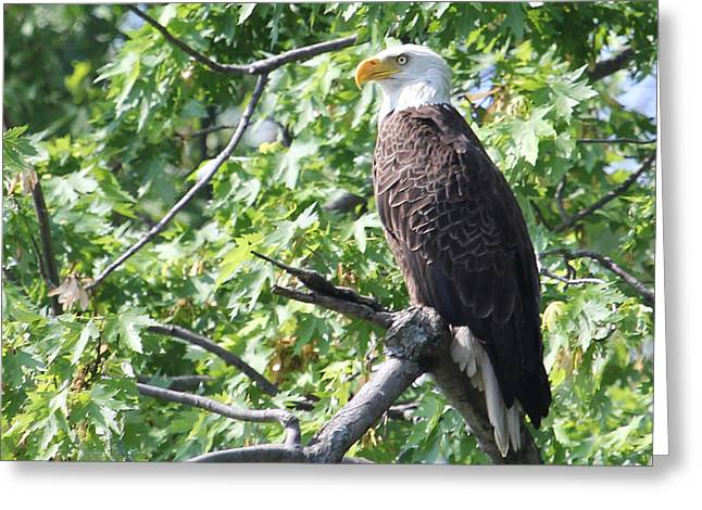 Eagle Lookout.  Greeting Card