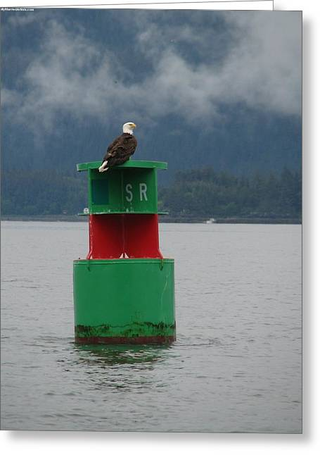 Eagle On Bouy Greeting Card