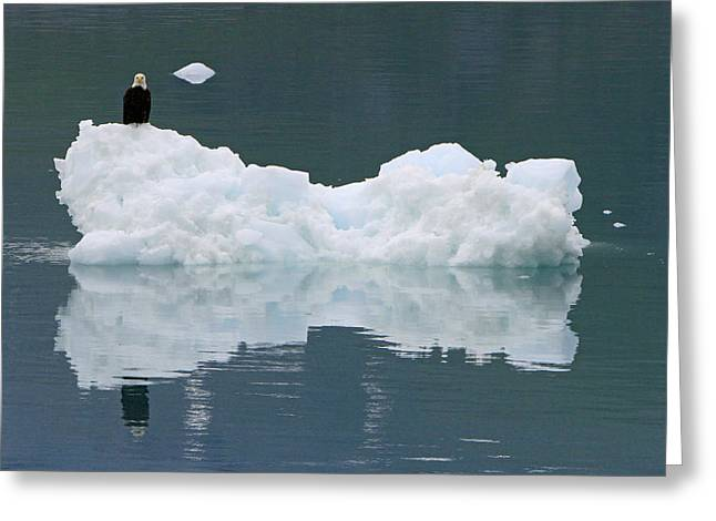 Eagle On Ice Greeting Card by Shoal Hollingsworth