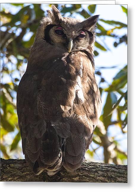 Eagle Owl Greeting Card by Craig Brown