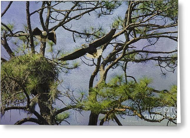 Eagle Pair And Nest Greeting Card by Deborah Benoit