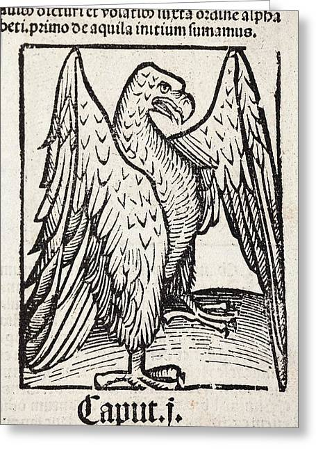 Eagle Greeting Card by Paul D Stewart