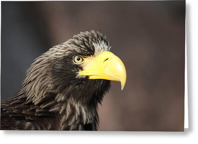 Eagle Portrait Greeting Card