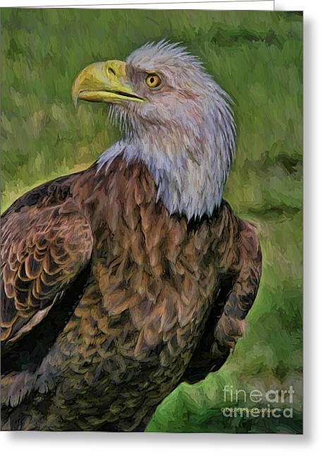 Eagle Portrait Oil Greeting Card by Deborah Benoit