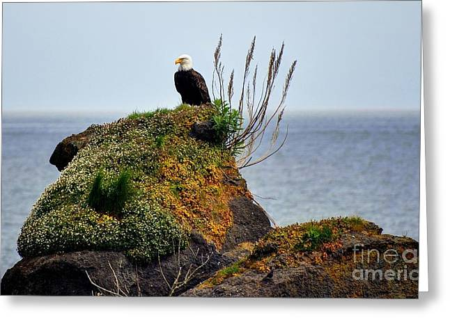 Eagle Resting Greeting Card by Phillip Garcia