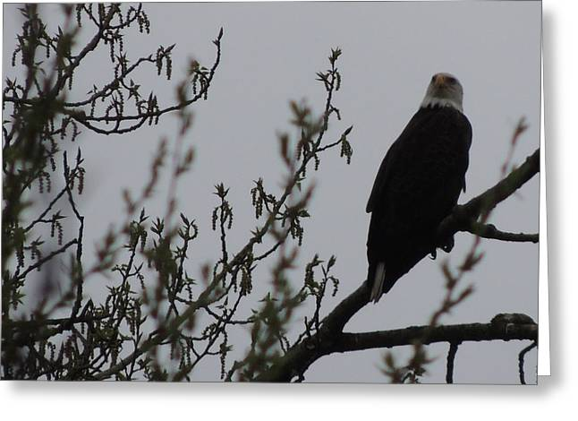Eagle Series Greeting Card