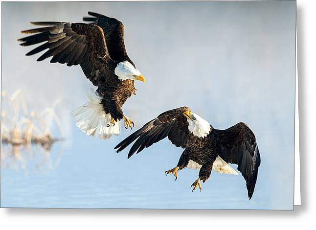 Eagle Showdown Greeting Card
