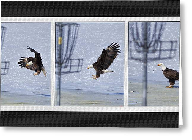 Eagle Triptych Greeting Card by Rob Graham