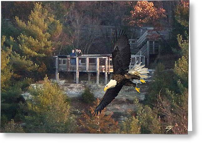 Eagle Watch Greeting Card by Sotiri Catemis
