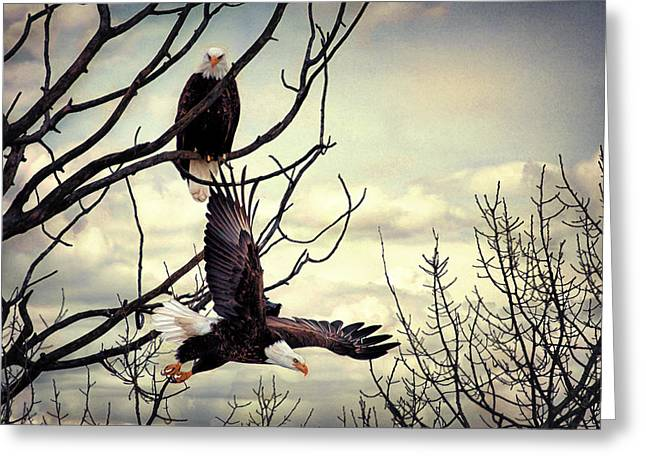 Eagle Watching Eagle Greeting Card by Gary Smith