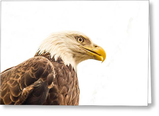 Eagle With Prey Spied Greeting Card by Douglas Barnett